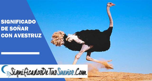Significado de soñar con avestruz