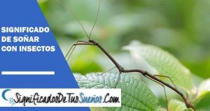 Significado de soñar con insectos | Significado onírico