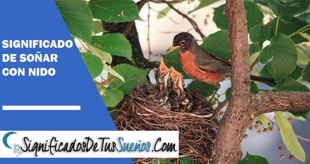 Significado de soñar con nido