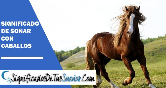 Soñar con caballos ¿Cual es su significado Onírico?