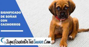 Interpretación y significado de Soñar con cachorros