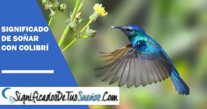 Significado de soñar con colibrí