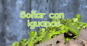 Significado soñar con iguanas
