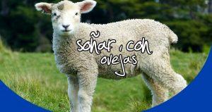significado Soñar con ovejas