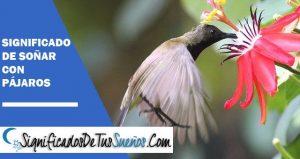 Interpretación y significados de Soñar con Pájaros