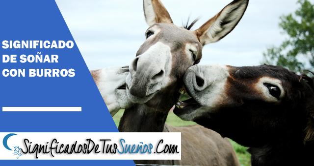 Significado de soñar con burros