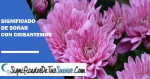 que significa soñar con crisantemos